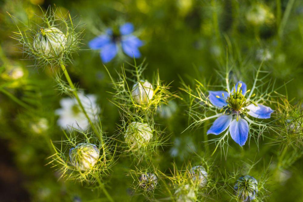 reiki balance flowers