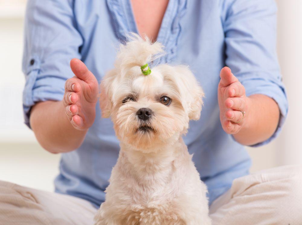 animal communication dog massage
